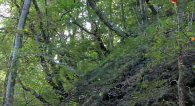 Schlucht- und Hangmischwald