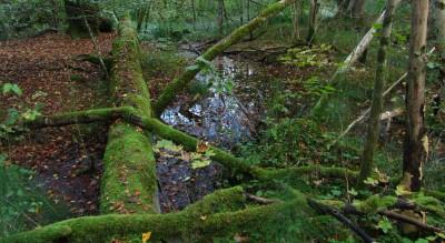 Naturwaldreservat_Geuderleite